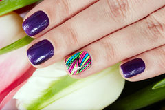 Nails with beautiful manicure and tulip flowers Royalty Free Stock Photo