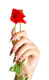 Nails and flower. Female hand with beautiful nails holds a red flower, on a white background stock image