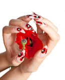 Nails and flower. Two female hands with beautiful nails over a red flower, on a white background royalty free stock photo