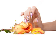 Nails and flower. The hand of the girl with beautiful nails, touches to a rose, on a white background stock photography