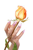 Nails and flower. The hand of the girl with beautiful nails, holds a rose between fingers, on a white background stock photo
