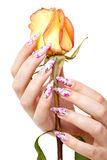Nails and flower. Two hands of the girl with beautiful nails hold a rose, on a white background royalty free stock photography