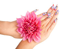 NAILS AND FLOWER. Two female hands with beautiful fingernails over a pink flower, on a white background royalty free stock images