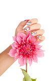 NAILS AND FLOWER. Female hand with beautiful fingernails over a pink flower, on a white background stock photography