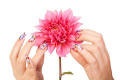 NAILS AND FLOWER. Two female hands with beautiful fingernails over a pink flower, on a white background royalty free stock photo