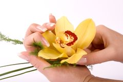 Nails with flower Royalty Free Stock Photos