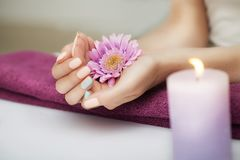 Nails in the spa. Well-groomed nails. Beautiful girl holds a flower in her hands. In the beauty salon. Spa treatments. The concept Royalty Free Stock Photo