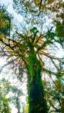 Nainital, Inde Photographie stock libre de droits