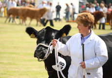 Nairn farmers show Royalty Free Stock Image