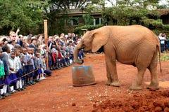 Nairobi Kenya 2014: Barn håller ögonen på, som elefantdrinkar ut ur vattenfack på David Sheldrick Wildlife litar på royaltyfri fotografi