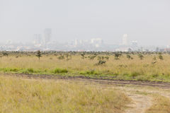 Nairobi National Park Stock Photo