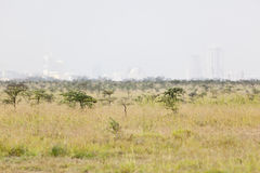 Nairobi National Park Royalty Free Stock Photography