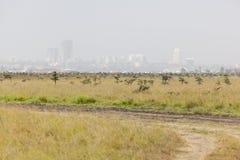 Nairobi nationalpark Arkivfoto