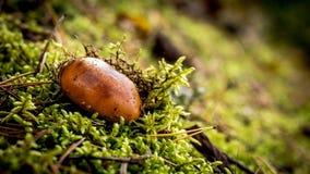Naissance de champignon images libres de droits