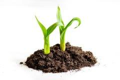 Naissance de concept de la pousse d'idée du sol sur le fond blanc Image stock
