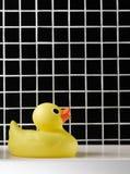 Naissance du canard en caoutchouc Photographie stock