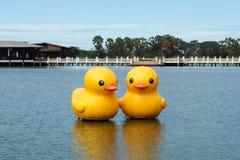 Naissance du canard en caoutchouc Photo stock