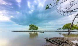 Naissez sur la plage avec des arbres de palétuvier s'élevant sur seules des levées Photo stock