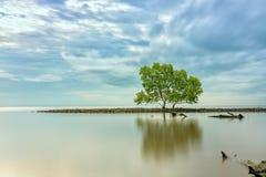 Naissez sur la plage avec des arbres de palétuvier s'élevant sur seules des levées Photographie stock libre de droits