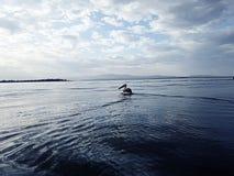 naivasa λιμνών στην Κένυα Στοκ Εικόνες