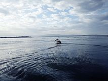 naivasa de lac au Kenya Images stock