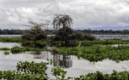 Naivasha lake Royalty Free Stock Image