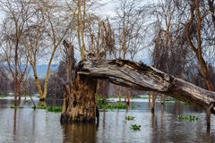 Naivasha lake Stock Photo