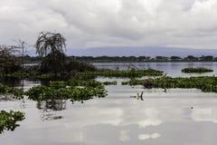 Naivasha See Lizenzfreies Stockbild