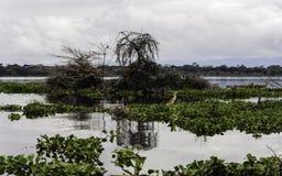 Naivasha See Lizenzfreies Stockfoto