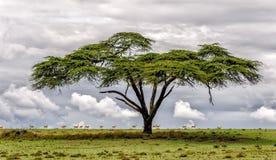 Naivasha See Stockfoto