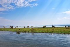Naivasha See, Morgennebel, Sonne rays stockfoto