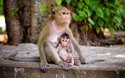 Naive Ansicht eines kleinen Affen Stockbilder