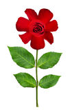 Naive stylized red rose flower. Isolated on white Stock Photos