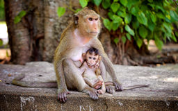 Naive view of a small monkey Stock Images