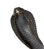 naja égyptien de haje de cobra photo stock