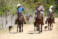 Cowboys and dogs on a dirt road Stock Image