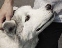 najlepszego psiego przyjaciela lojalny mężczyzna s Zdjęcia Royalty Free