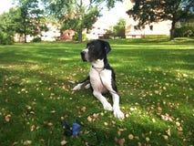 Najlepszy pies kiedykolwiek Zdjęcia Royalty Free
