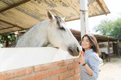 Najlepszy Świezi Veggies Dla Mój konia obrazy royalty free