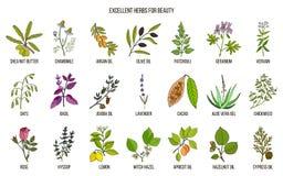 Najlepszy ziele dla piękno opieki ilustracji