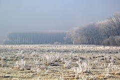 najpierw elementy frost Obrazy Royalty Free