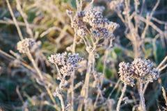 Najpierw oszronieję w jesieni, mróz na trawie Zdjęcia Stock