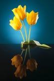 Najwięcej pięknych żółtych tulipanów obraz royalty free