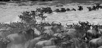 największa migracja Zdjęcie Stock