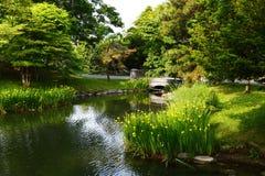 The pond and grove in Nakajima Park. Nakajima Park, Sapporo, Hokkaido, Japan Stock Images