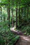 Nakasendo lasowy ślad Obraz Royalty Free