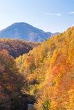 Nakatsugawa Fukushima Autumn Royalty Free Stock Images