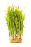 Nake Wheatgrass Royalty Free Stock Photo