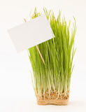 Nake wheatgrass with a sign. A bunch of wheat grass with a sign Stock Image