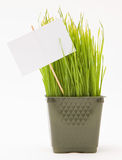 Nake wheatgrass with a sign. A potted bunch of wheat grass with a sign Stock Images